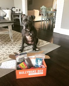This Pitbull pup is so ready to dig into his Bullymake Box!  www.bullymake.com via: @bluee_cheese