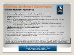 Step by step guide for reuniting lost pets with their owners - Losing A Pet, Dog Walking, Health Care, Animals, Lost Pets, Step Guide, Animais, Animales, Animaux