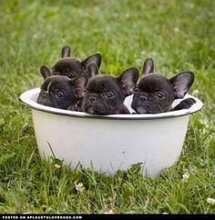 A bucket of bullies