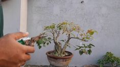The most effective method to maintain bonsai tree/একটি বনসাই গাছ বজায় র... How To Grow Bonsai, Bonsai Garden, Cool Pictures, Channel, News, Gallery, Link, Nature, Youtube