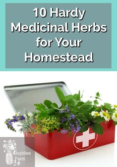 10 Herbs to grow and how to use them for their medicinal properties. 10 Herbs to grow and how to use them for their medicinal properties. Herbal Remedies, Natural Remedies, Herb Garden Design, Herbs Garden, Herb Gardening, Garden Ideas, Rosehip Tea, Plant Identification, Wild Edibles