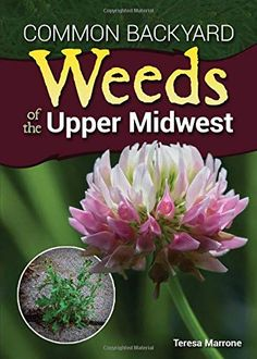 "Read ""Common Backyard Weeds of the Upper Midwest"" by Teresa Marrone available from Rakuten Kobo. Market: homeowners, gardeners and anyone else interested in identifying wild plants Identification guide to nearly 60 sp. Wisconsin, Michigan, Plant Identification, Weed Control, Edible Plants, Science Books, Field Guide, South Dakota, Colorful Flowers"