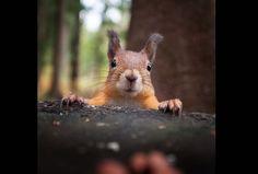 D'adorables photos d'animaux sauvages par Konsta Punkka