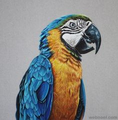 colored pencil drawing bird
