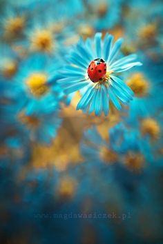 asters with ladybug