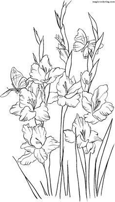 MAGIC-COLORING | Gladiolus Coloring Pages