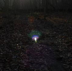 CURIOUS CASE OF ORBS! A young couple in love took this photo while hiking the woods. If you look above the multicolored orb/object you will also see an orange orb.