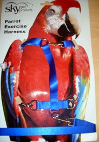 PARROT HARNESS available in small, medium or extra large http://shop.robharvey.com/parrot-harness-286-c.asp