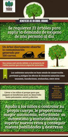 Beneficios de los árboles urbanos #accionesverdes #eco #estudiantes #umayor