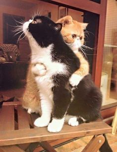 Ideas funny pictures of cats kittens kitty for 2019 Cute Kittens, Cats And Kittens, Cats 101, Animals And Pets, Baby Animals, Funny Animals, Cute Animals, Funniest Animals, I Love Cats