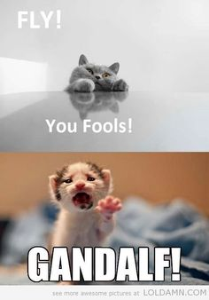 kitten memes | funny kitty Gandalf meme fly you fools  lord of the rings twin towers in kitten form