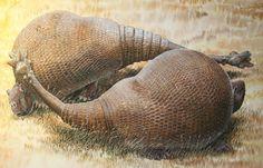 «Recreación artística de dos gliptodontes, familiares de los armadillos de hasta dos toneladas. Se ha secuenciado ADN recuperado de su caparazón», Peter Schouten