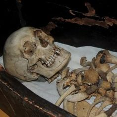 The mummy of the pharaoh Amenhotep II's foster brother may have been found in a former monastery, according to archival research into 19th-century documents.  The mummy, now reduced to a skeleton, is believed to be that of Qenamun, the chief steward of Amenhotep II (about 1427–1400 B.C.) who was the 7th Pharaoh of Egypt's 18th Dynasty and likely Tutankhamun's great-great-grandfather.