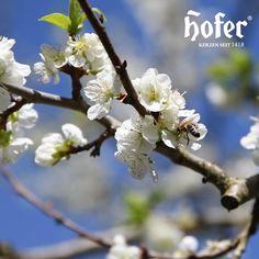 ♥️ Liebevolles Gedenken ♥️ mit unseren wunderschönen Frühlingsmotiv-Grabkerzen! Ecommerce, Life Hacks, Plants, Outdoor, Keepsakes, Candles, Flowers, Nice Asses, Outdoors