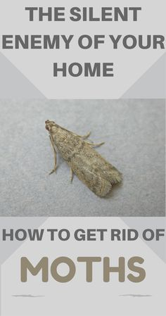 In This Article I Will Show You How To Get Rid Of Moths But Also