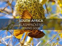 Flashpackers South Africa
