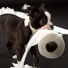 House Training an Adult Dog… #dogtrainer Police Dog Training, Puppy Training Schedule, Training Your Puppy, Training Tips, Leash Training, Crate Training, Puppy Biting, Dog Training Techniques, Aggressive Dog