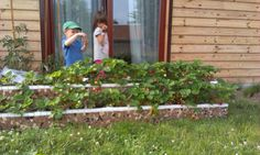 """My """"house for strawberries"""" :-)"""
