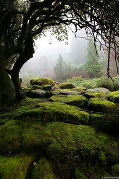 Secret garden mossy rocks faries live here