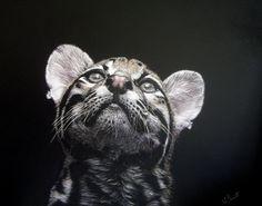 """""""Ocelot Dreaming"""" by scratchboard artist Lesley Barrett"""