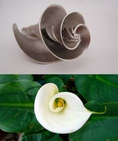Pax Technologies took the calla lily's shape as inspiration for a water mixer. The flower's centripetal spirals assist with the ideal flow of liquid, which allows their design to mix more liquid with a fraction of the horse power usually required. Using nature's perfected designs helps minimize energy requirements