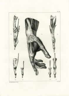 1831 Anatomy Fingers Hand Muscles Tendons, Hand Print Large Size, Poster Bourgery Medicine Wall Art
