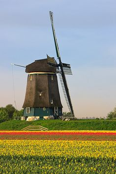 Holland, the Land of Tulips and Windmills