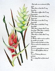 Heliconia Paintings - Heliconia Poem  by Karin Kelshall- Best