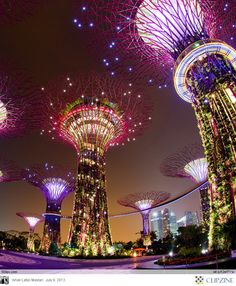 "Singapore's Supertrees at the ""Gardens by the Bay"". I see I'll have to go back to Singapore to see these by night."