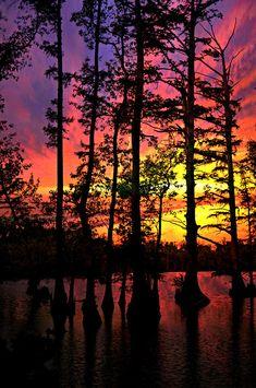 ✮ Vivid sunset on Horseshoe Lake silhouettes Bald Cypress trees  in Southern Illinois