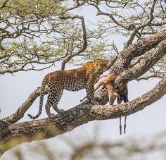 Gosheni Safaris (@gosheni_safaris) | Twitter Arusha, African Safari, Tanzania, Wildlife, Animals, Twitter, Animales, Animaux, Animal