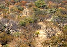 This is where my heart will always be: Bushveld