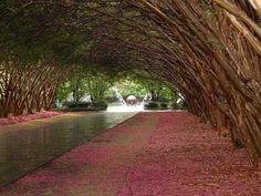 """The Dallas Arboretum and Botanical Garden"" - Dallas, Texas."