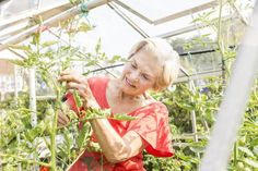 The Right Way to Prune Your Tomato Plants