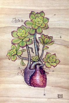 Aeonium 'Kiwi' Heart