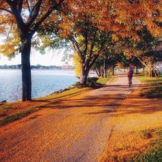Along the Lake Monona Bike Path, Madison, Wisconsin, by @mitch_hawes (http://instagram.com/p/txWa1GGzTx/). Share your #midwestmoment for a chance to be featured!  Details: http://www.midwestliving.com/blog/travel/top-5-instagram-photos-for-october/