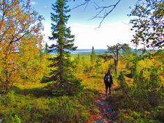 Hiking on the fjell of Pyhitys, Taivalkoski, Kuusamo Lapland, Finland Lapland Finland, Summer Activities, Homeland, Canoe, Hunting, Fishing, Camping, River, Mountains