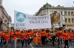 """Vladivostok residents came out in droves to celebrate the 16th anniversary of the """"Day of the Tiger."""" This year, the International Fund for Animal Welfare and Fund &ldq"""