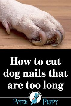 Cats – Dogs Nails – How to Cut Dog Nails That Are Too Long and Get the Correct Dog Nail Length Loading. Cats – Dogs Nails – How to Cut Dog Nails That Are Too Long and Get the Correct Dog Nail Length Clipping Dog Nails, Trimming Dog Nails, Dog Health Tips, Pet Health, Dental Health, Dental Care, Dog Care Tips, Pet Care, Puppy Care