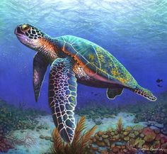 Drawing Animals Morgan Davidson drawing - amazing colored pencil drawing of a sea turtle, love the colors - 22 year old artist Morgan Davidson creates realistic color pencil illustrations, her work includes detailed studies of body parts and portraits.