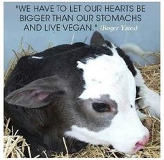 """We have to let our hearts be bigger than our stomachs and live vegan."" Roger Yates"