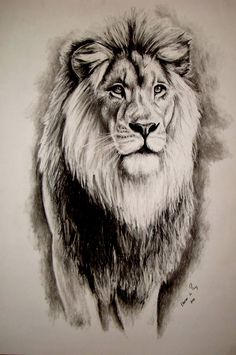 Lion - Charcoal on Paper Artist: Ellenor Hastie (Facebook) ***SOLD*** Animal Sketches, Animal Drawings, Pencil Drawings, Arte Yin Yang, Lion Sketch, Lion Head Tattoos, Lion Tattoo Design, Tattoo Designs, Lion Drawing