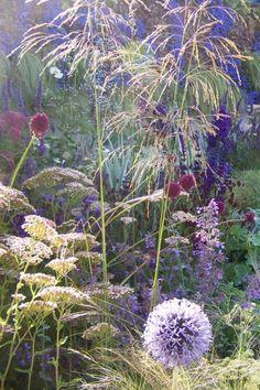 beautiful combination of plants w/ grass flowers like tiny fireworks; from garden designer Sharon Hockenhull's blog