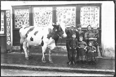 Beautiful photo of village family with a cow :) in vintage Belgrade...it is soo nice how older sister takes hand of younger sister...<3