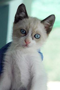 CHITO - Gato adoptado - AsoKa el grande