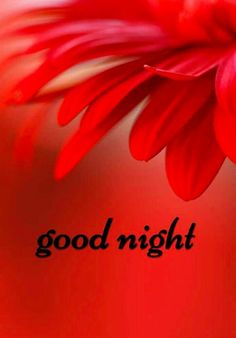 Good Morning Quotes Discover Good Night Images For Whatsapp Good Night Flowers, Lovely Good Night, Good Night Baby, Good Night Friends, Good Night Messages, Good Night Wishes, Good Night Sweet Dreams, Good Night Image, Good Night Quotes