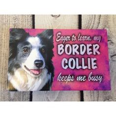 """Border Collie Dog Lover Quote 8"""" x 5"""" Canvas Print Wall Sign"""