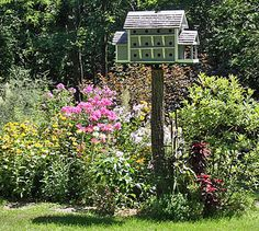 The Martin House garden at Home Farm in early summer. A couple of the apartments in the birdhouse have little martin families in them.