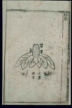 File:Anatomy of the lung in ancient Chinese medicine, woodcut Wellcome L0037492.jpg