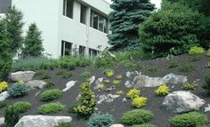 Office Park Slope after rock placement and planting